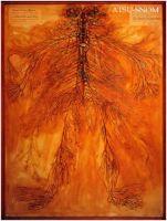 człowiek jako sieć naczyń krwionośnych